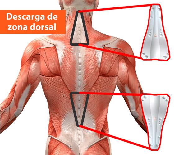 Descarga de zona dorsal