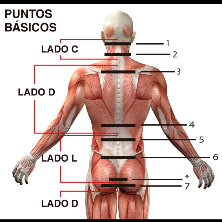 Puntos básicos de la espalda para el uso de Cordus