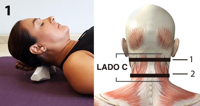 CORDUS se coloca transversalmente al eje de la columna vertebral con el lado C debajo del cráneo