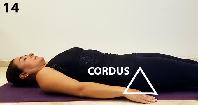 """Coloca el lado """"D"""" de CORDUS debajo del coxis (última vértebra de la columna) y estira las piernas."""