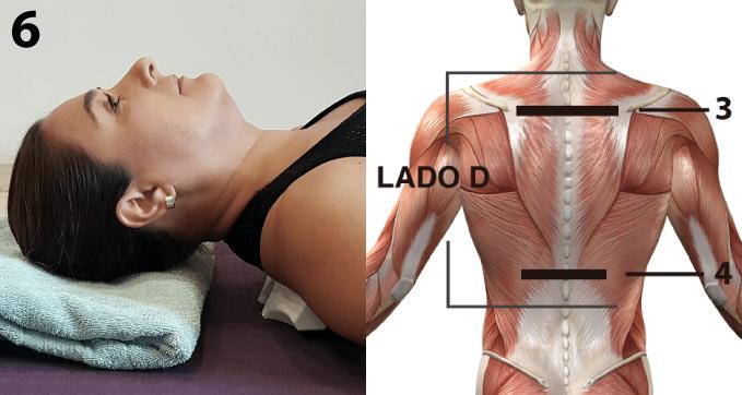 """Coloca el lado """"D"""" de CORDUS por encima de los omóplatos, de 4 a 5 cm debajo de la vértebra C7 (la vértebra que sobresale a la altura de los hombros)"""