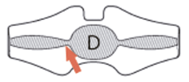 Lado D: Dorsal – Coxis